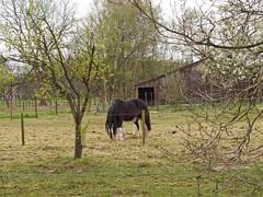 de Kampina (ericderedelijkheid) Tags: kampina boxtel oisterwijk netherlands nederland noordbrabant laaghoeve nature april