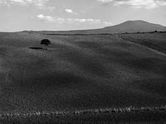 h-1721copia-2 (alessandromagagna1) Tags: toscana tuscany italy primeval photography