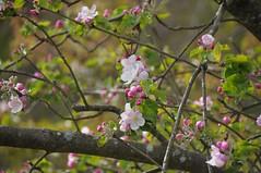Beautiful flowers (reuter.felix) Tags: flower green nature tree
