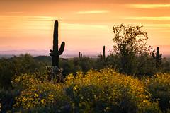 20170320-DSC_4969 (lilnjn) Tags: arizona landscape southwestunitedstates travel unitedstates sky sunrise whitetank