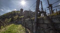 the vineyard (Erich Hochstöger) Tags: weinberg vineyard ruinehinterhaus ruinhinterhaus mauer wall weinstock vine sonne sun landschaft landscape spitzanderdonau wachau