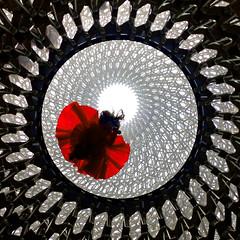 UK - London - Kew Gardens - The Hive 01_sqIMG_1396 (Darrell Godliman) Tags: uklondonkewgardensthehive01sqimg1396 thehive hive kewgardens wolfgangbuttress bdp installation engineering art structure glassfloor contemporaryart london red lookingup circle squareformat sq bsquare squares phone iphone stageone simmondsstudio pavilion royalbotanicalgardens kew richard richmonduponthames england britain greatbritain unitedkingdom uk gb europe contemporaryarchitecture modernarchitecture architecture building ©dgodliman darrellgodliman wwwdgphotoscouk dgphotos allrightsreserved copyright travel tourism britishisles capital city instantfave omot flickrelite travelphotography travelphotographer architecturalphotography architecturalphotographer