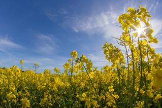 Northington fields