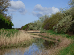 Buck Beck Cleethorpes. (Peanut1371) Tags: cleethorpes water reeds trees sky clouds grass