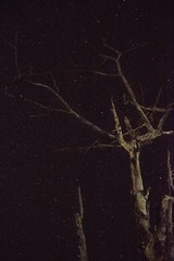 Astrophotography (Tanzim ⋈) Tags: ifttt 500px tree 50mm canon star astro astrophotography 50mmf18 bangladesh canon760d