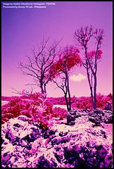 FPP Color IR by Aislinn Chuahiock (Michael Raso - Film Photography Podcast) Tags: colorinfraredphotography fppinfrachromecolorinfraredfilm infraredfilm kodakaerochromeiii