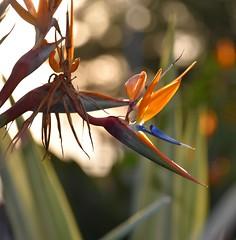 life (sabinakurt62) Tags: garden flora nature flower beautiful art life