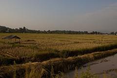 Krajina v oblasti Zlatého trojúhelníku (zcesty) Tags: krajina pole thajsko severníthajskoalaos20132014