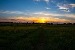 Farm sunset (sniggie) Tags: pond spring rapeseed barn kentucky canola marioncounty clouds sunset path canolafarm