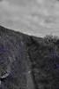 Feeling Blue (richardsolway) Tags: perranuthnoe cornwall path bluebells blue bells flowers selective colour cudden coast