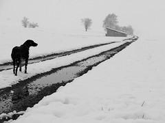 Aprilwetter (flori schilcher) Tags: schilcher winter hund