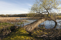 Spring on the River (Lucie Maru) Tags: minnesota river lakes spring landscape tree fallentree moss springtime water