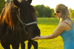 Hungry Hungry Horse (Matt Champlin) Tags: life summer horse cute rural canon wonderful spring warm peace farm country farming warmth wife fields upstatenewyork farms stace caring care equine springtime drafthorse 2013 womanfeedinghorse