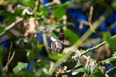 DSC_1512 (john.r.d.reynolds) Tags: goldengatepark birds wildlife hummingbirds