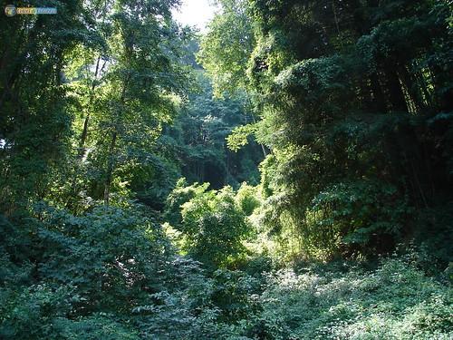VV-Serra San bruno- Il bosco 4702_L
