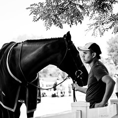the groom (Jen MacNeill) Tags: horses blackandwhite bw horse man male english groom blackwhite pennsylvania pa devon shade hunter resting horseshow equestrian equine riders bridle devonhorseshow canon6d gypsymarestudios jennifermacneilltraylor jmacneilltraylor jennifermacneill jennifermacneillphotography