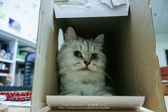 DSC_7562 (archiwu945) Tags: china cat kaohsiung   nikon1 nikon1j2