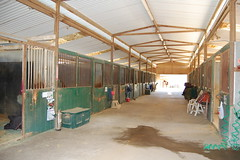 "Show Barn • <a style=""font-size:0.8em;"" href=""https://www.flickr.com/photos/92793179@N08/9300204419/"" target=""_blank"">View on Flickr</a>"
