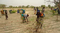 NIGER Women working on their agricultural land near the village of Mamoury, acquired through the local land convention (Pic by Alima Mamadou)