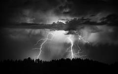 s i z z l e | woodside, california (elmofoto) Tags: lightning flash bolt storm longexposure le nikon d800 nikond800 california thunder nature thunderstorm 70200mm weather clouds blackandwhite bw monochrome drama silverefexpro night elmofoto lorenzomontezemolo silhouette tree 500v 1000v tidder 2500v explore explored 5000v flickr10 nocturne fav10 fav20 fav30 fav40 fav50 fav60 fav70 fav80 fav90 fav100 fav200 pf largerthanlife atv oldfaithful fav300 25000v
