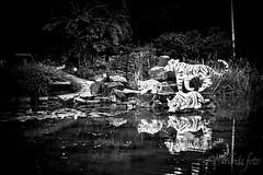 2013-10-01_3707.jpg (flyfast 70 ... aussi sur Behance) Tags: bw green fall nature automne blackwhite noir soir nuit plantes lanternes noirblanc jardinbotaniquemontreal