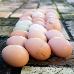 Fresly harvested (Tanya Mattek, Norman, OK) Tags: brown repetition eggs 365 fresheggs