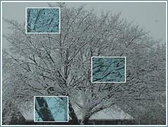 It's a snow-tree! (MissyPenny) Tags: winter snow tree pennsylvania snowstorm buckscounty bristolpennsylvania missypenny