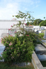 Key West (Florida) Trip, November 2013 7948b 4x6 (edgarandron - Busy!) Tags: cemeteries cemetery grave keys florida graves keywest floridakeys