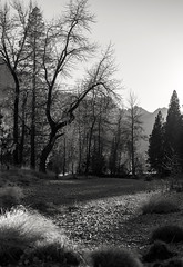 Yosemite Valley, Thanksgiving 2013 (rowjimmy76) Tags: california thanksgiving november autumn trees bw usa white black fall nature forest canon landscape outdoors unitedstates hiking yosemitenationalpark yosemitevalley markii sierranevadamountains canonef50mmf14usm 5dm2 5dmii