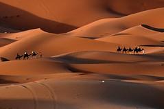Camino de Oriente. (Victoria.....a secas.) Tags: desert dunes explore desierto marruecos dunas sáhara caravanas