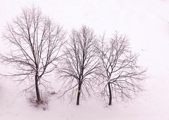 Three lime trees in snow (Stella VM) Tags: trees winter white snow tree beautiful landscape sofia bulgaria