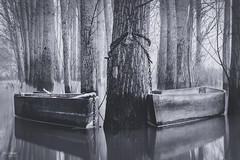 in love (Paulo_Veiga) Tags: trees wild bw white lake black portugal water branco fog reflections river landscape boats photography boat flickr barco foto barcos picture pb paisagem preto textures land fotografia fishingboat pp 2014 reflectionsonwater pateira fermentelos pauloveiga lens18200mm