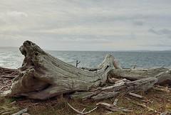 ROB_0199 (Sardonic G) Tags: ski ferry washington wind driftwood whidbeyisland pugetsound langley coupeville whitecaps whitecapes