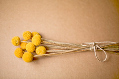 Yellow Pom Pom (Serena178) Tags: wedding flower detail floral yellow bunch twine pompom odc2 pompomchrysanthemums