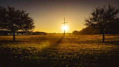 """House"" (Jimtography@yahoo.com) Tags: trees sun house fog zeiss sunrise landscape shadows shine cross florida sony carl 12mm goodmorning carlzeiss nex houseoftherisingsun touit emount sonynex nex5r touit2812 zeisstouit jimtography"