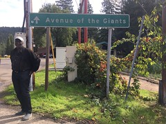 Avenue.of.the.Giants.KarenB (redwoodcoaster) Tags: travel humboldt california nature redwoods drivethrutree