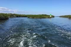 23. Mangroves (Misty Garrick) Tags: johnpennekamp johnpennekampreef johnpennekampcoralreefstatepark coralreef florida keylargofl keylargo floridakeys atlanticocean