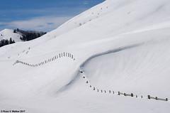 Snow-Crossed (walkerross42) Tags: snow fence snowdrift drift winter mountains canyon saltcreekcanyon wyoming pentaxart