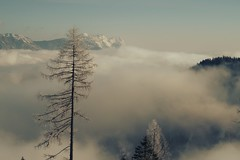 Valley fog (No_Mosquito) Tags: winter fog morning valley scenery mountains alps trees canon powershot g7x mark ii austria cold freezing ennstal ngc landscape snow frost styria reiteralm europe ski trip outdoor