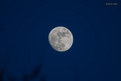 """Leipzig, Gohlis-Nord, Mondaufgang zur """"Blauen Stunde"""" 18:32 Uhr (joergpeterjunk) Tags: leipzig gohlisnord outdoor mondaufgang himmel blauestunde canoneos50d canonef100400mmf456lisusm canonextender14xmarkiii"""