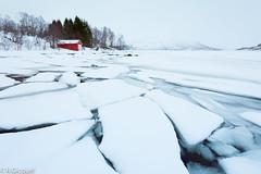 Winter Lofoten (Norway) (renan4) Tags: lofoten winter fjord snow sea water mountains beach island norway europe north travel trip nikon d800 1635mm renan4 renan gicquel redhouse