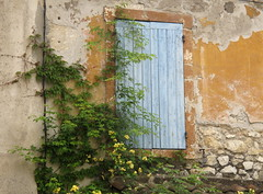 Affascinante decadenza (Raffa2112) Tags: villenuevelésavignon finestra imposta azzurro pianta fiori fiorigialli decadenza decay window shutters yellowflowers flowers vine blue raffa2112 canonpowershotg10 parete wall