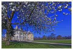 Spring day [Explored] (Myrialejean) Tags: spring belton nationaltrust tree blossom green grass building mansion grantham nikond7200 sigma park gardens flower happy national trust springtime architecture historic flowers old garden lawn