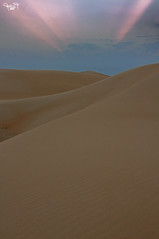 Desert Ahsa (A.Alwosaibie) Tags: nikon d90 aalwosaibie 2017 shot photo 18105mm spot light work alhasa hasa saudi aribiea desert
