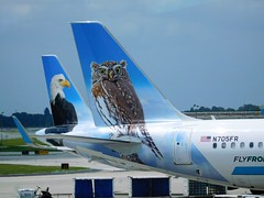 Steve and Ferndale at MCO (kenjet) Tags: f9 frontier frontierairlines tail tails bird birds owl feather feathers blue mco kmco orlando florida orlandointernationalairport airbus plane jet airline airliner aircraft aviation a321 a321200 a321211 n705fr 705 pygmyowl ferndale steve eagle baldeagle n709fr 709 flugzeug