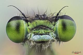 miradas en verde