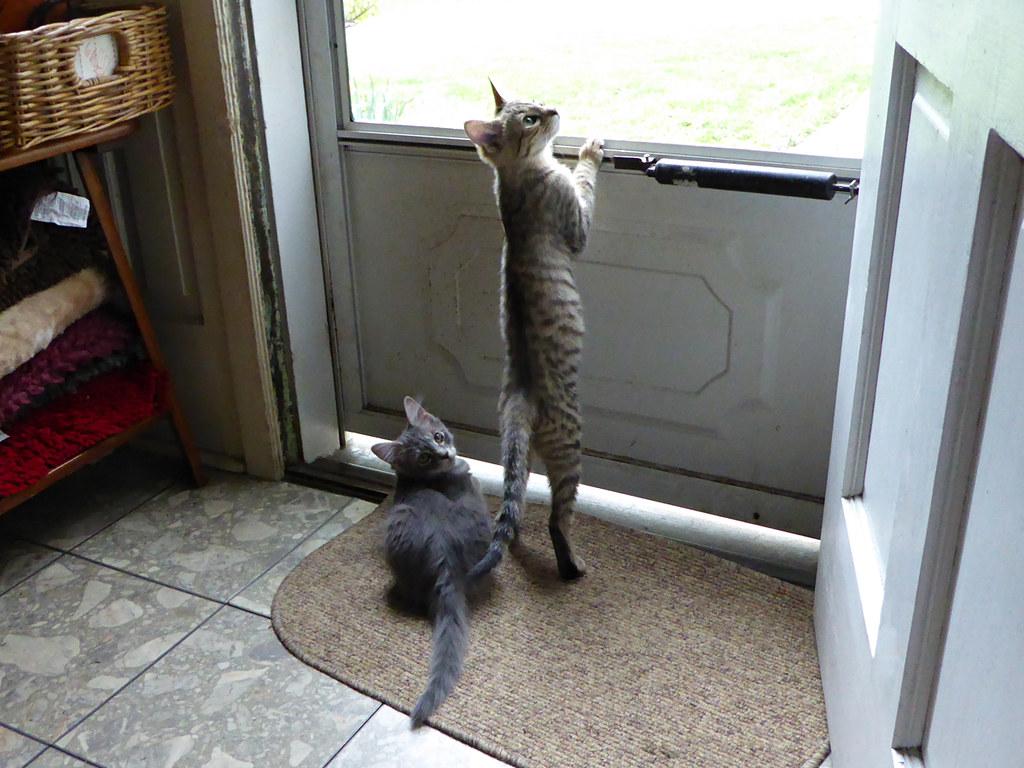 Fvr Cats