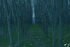 ΔΑΣΟΣ (Vas D. Sp) Tags: φύση δάσοσ άγριο φωτογραφία woods nature ελλάδα