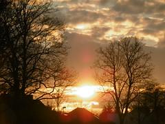 Sunset (SusiMaus88) Tags: sun sunset orangelight trees bäume lichtundschatten
