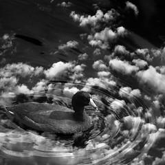 jazz photography. (Photomaginarium) Tags: surreal fantasy creativity imagination